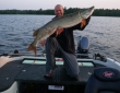 Andy H on 2005 620VS w Musky 8-1-13